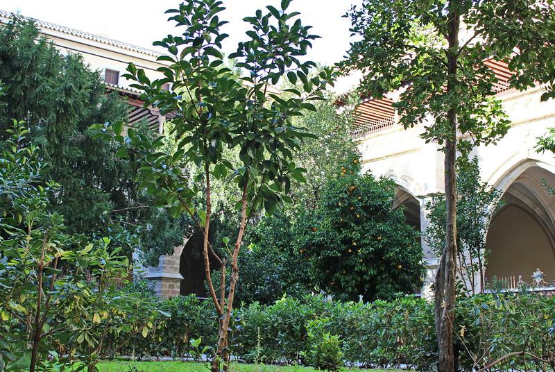 Orange Tree in the Courtyard Garden