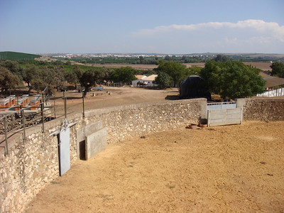 The private bullring (plaza de toros) on the farm where bulls are selected.