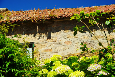 Tiled roof with plants growing, Vigo, Spain
