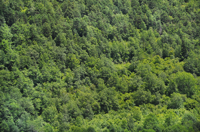 Trees in the Pyrenees. 2011.