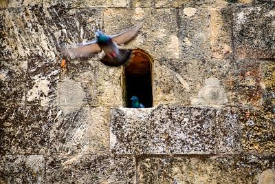 Pigeons of Alcazar