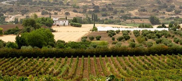 Andalucia vinyard