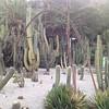 a cactus park in Barcelona