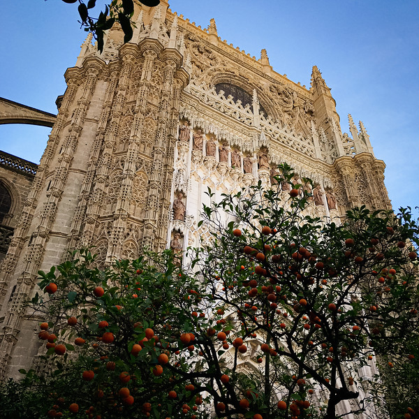 An orchard of orange trees in the cathedral