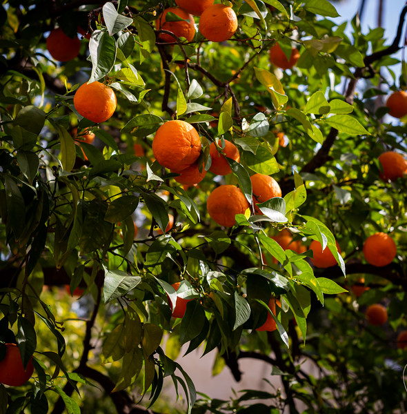 Oranges, again