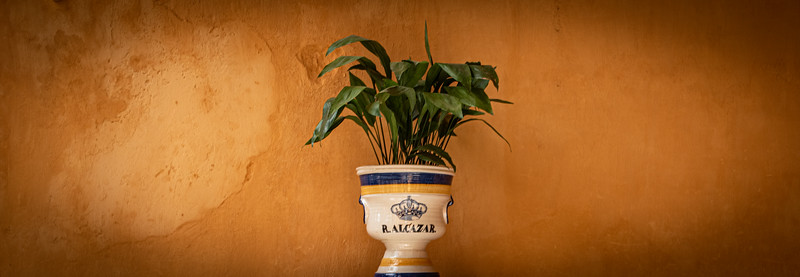 A plant in a pot. Real Alcazar