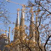 Trees in front of the Sagrada Familia in Barcelona, Spain