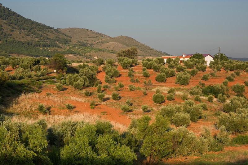Morning light on olive groves near Granada in Andalucia, Spain