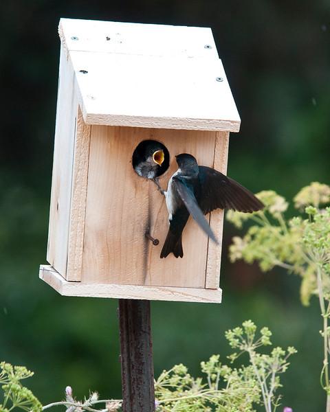nesting box at the berm trail, Hacienda Carmel