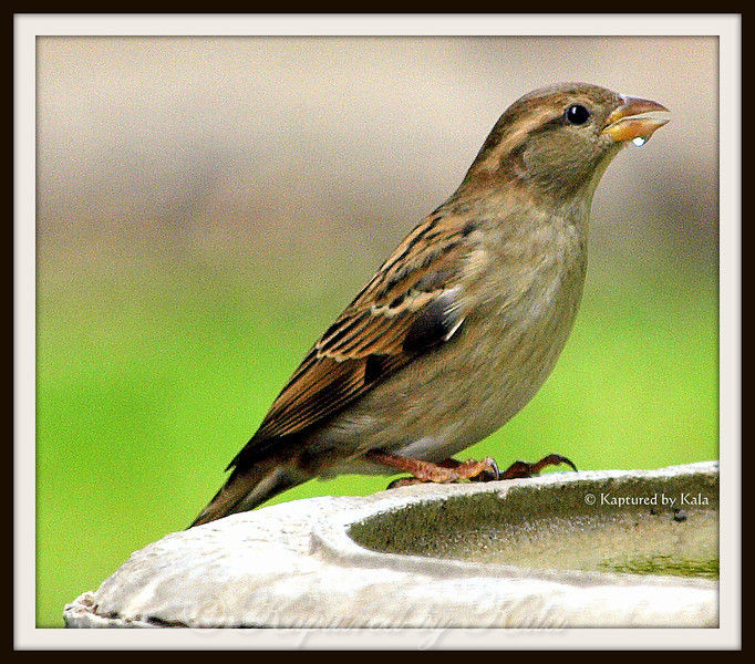 His Eye is on the Sparrow.....