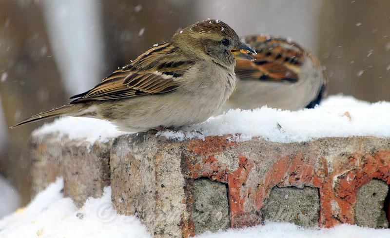 Even In A Snow Storm, A Birds Gotta Eat