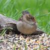 Strange Sparrow View 1
