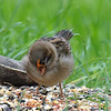 Strange Sparrow View 2
