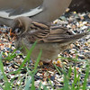 Strange Sparrow View 3