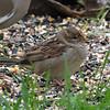 Strange Sparrow View 4