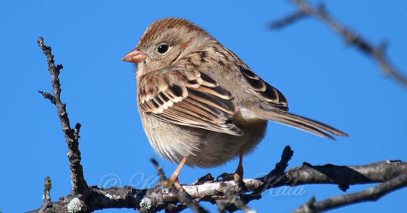 Cheeky Little Sparrow
