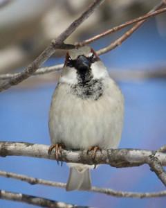 Sparrow Beak to Beak
