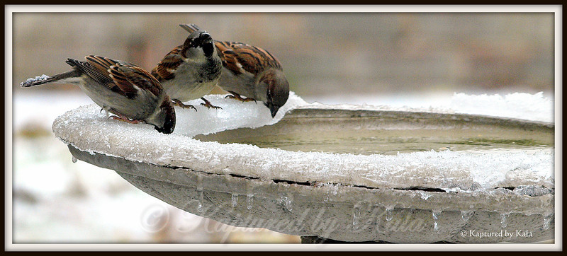 Quick, Drink Before it Refreezes!