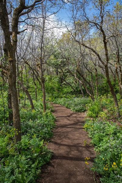 Nature Trail, Red Butte Gardens, Salt Lake City, Utah