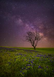 Dreams of Texas