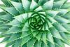 1823-Spiral Aloe v3 Master