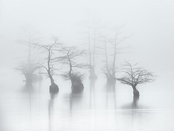FoggyTrees_mono_MG_9626