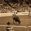 PRCA bull riding at the National Western Stockshow in Denver, Colorado.