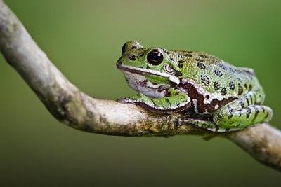Frog processed by Deede Denton