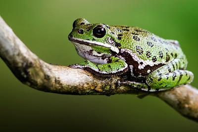 Frog processed by Ken Farman