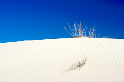 Dune Grass by Clarke Cochran