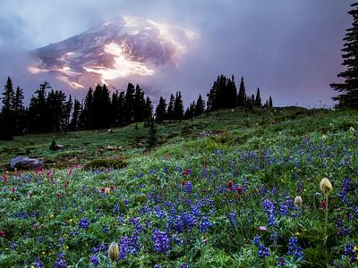 19 Mt Rainier Morning
