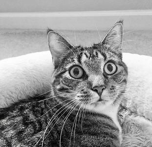 My Cat Alex
