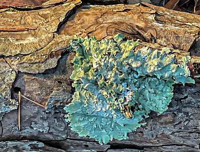 Wood and Fungus
