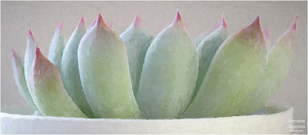 Painted Succulent