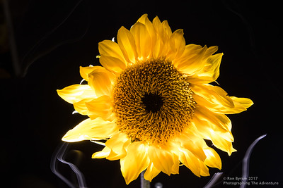 Light_Painting_Ron_byram_001