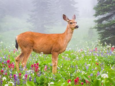 Paradise Deer