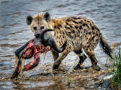 Breakfast in the Serengeti