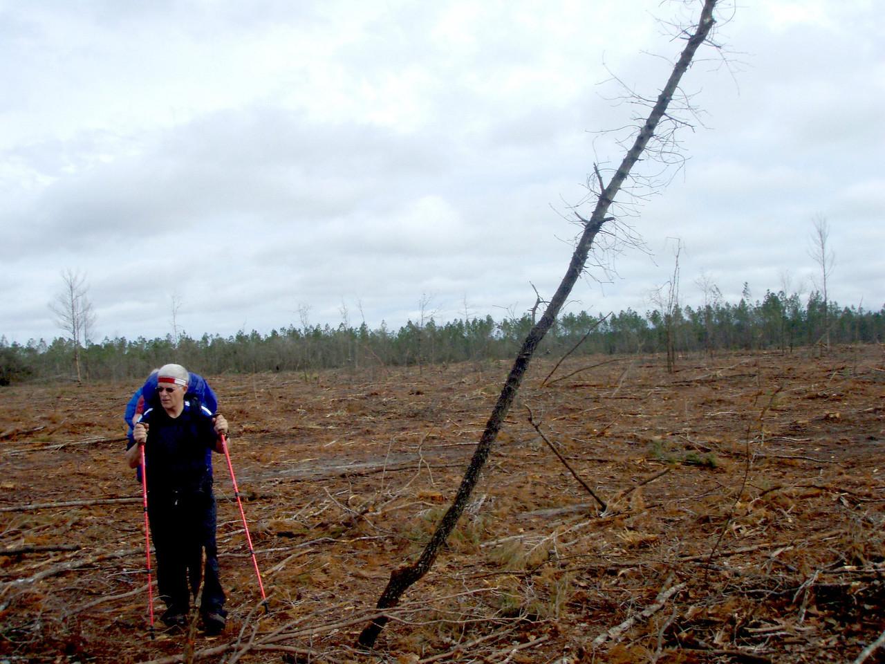 Stump makes it across the restoration clear cut.