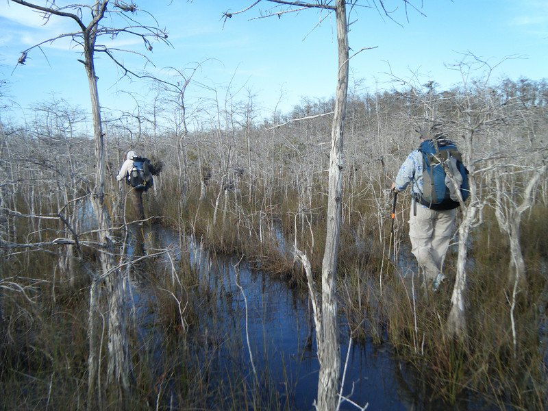 Tromping through Big Cypress