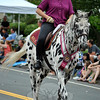 A Newtown Bridle Lands spotted horse at this year's Newtown Labor Day Parade. (Crevier photo)