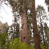Tree # 24
