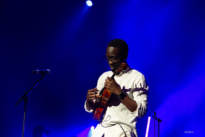 fa18blackviolin-107