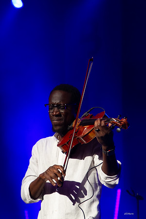 fa18blackviolin-109