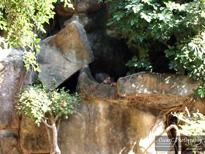 Crouching Kitty; Hidden Cat