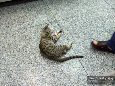 Playful kitten at a lunch stand. He is waiting for more dried fish to be thrown his way.