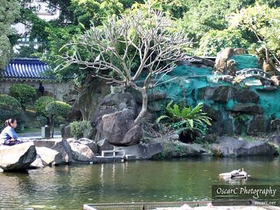 A serene pond