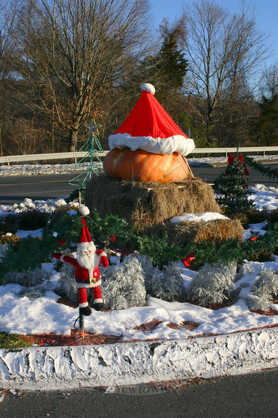 Autumn is over but you're not ready to lug off that big pumpkin you put out for Halloween. What to do? If you're Blue Colony Diner General Manager George Marnelakis, you dress it up for Christmas! And that's just what the Marnelakis family did again this year.  (Hicks photo)