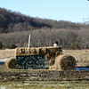 Frosty has taken over the hay tractor in the field of Paproski's Castle Hill Farm.  (Hicks photo)