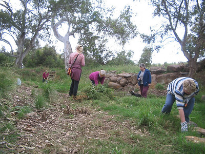 FoTC members planted weeded and picked up rubbish