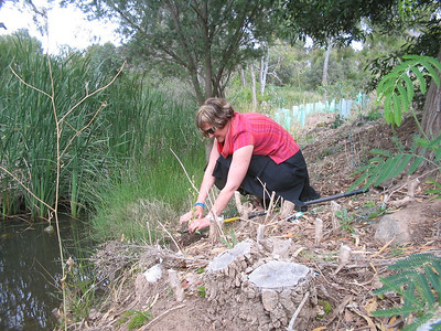 Community Health Nurse Maree Chambers planted at lunch time
